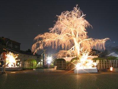 円山公園1.jpg