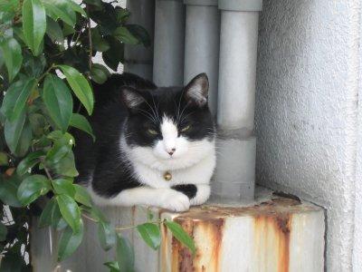 猫の気持ち.jpg