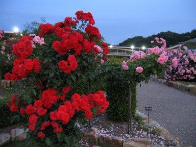 花フェスタ013.jpg