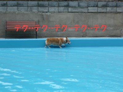 プールの淵1.jpg