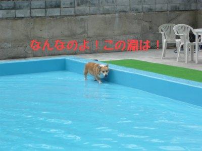 プールの淵2.jpg