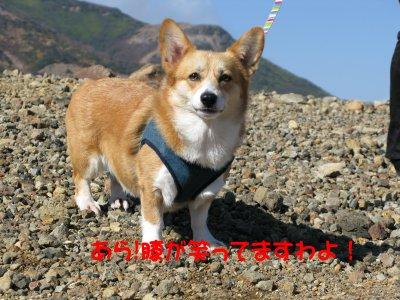 余裕の葵譲.jpg