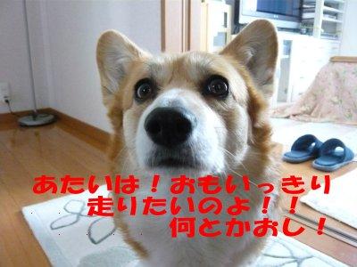 葵嬢の訴え.jpg